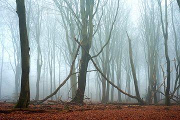 Unberührter Speulder- und Sprielderbos-Wald von Jenco van Zalk