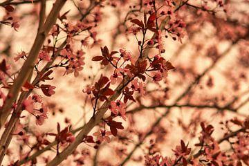 Japanse roze lente bloesem in een herfstkleur van J..M de Jong-Jansen