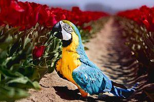Blauwgele ara houdt van tulpen! (papegaai) van T de Smit
