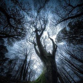 Een spookachtig ritueel - Sprookjesboom van Jeroen Lagerwerf