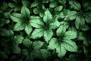 Hübsche Blätter