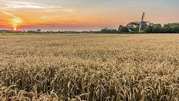 Tarweveld met zonsondergang van Jan Poppe