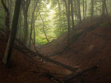 Een mistige ochtend in de bossen op de StJansberg bij Nijmegen. van Jos Pannekoek