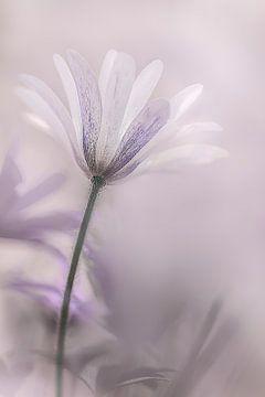 Purple love van Luc Toegaert