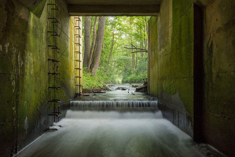 Concrete Jungle van Philippe Velghe