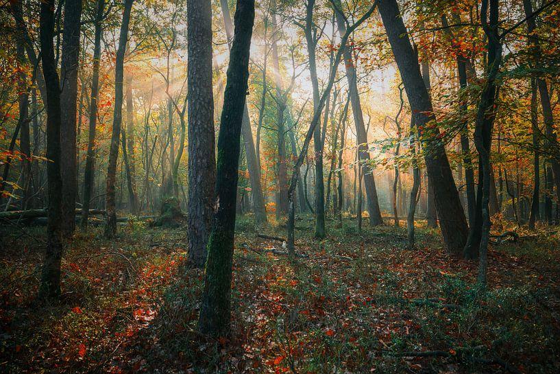 De kleuren van schoonheid van Joris Pannemans - Loris Photography