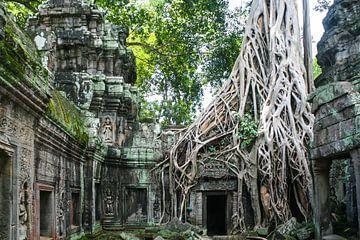 Natur nimmt in Kambodscha von
