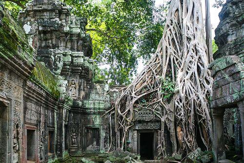 De natuur neemt in Cambodja