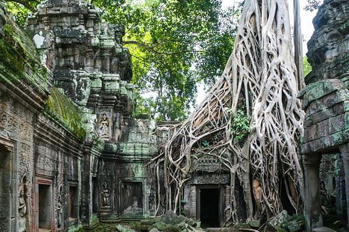 Natur nimmt in Kambodscha