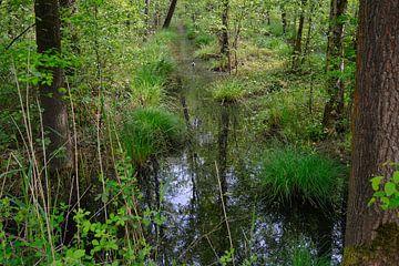 De Brand, natuurgebied nabij Udenhout van Verrassend Brabant