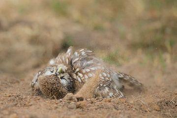 Die kleine Eule nimmt ein Sandbad. von Jeroen Stel