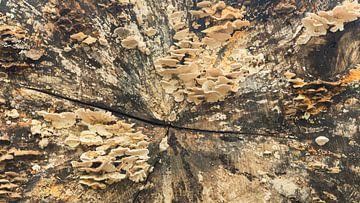 Herbststimmung mit neues Leben auf einem Baumstamm von Michel Seelen