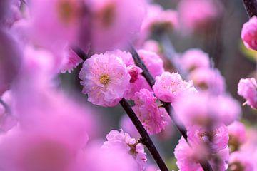Blüte im Frühling von Inge van der Stoep