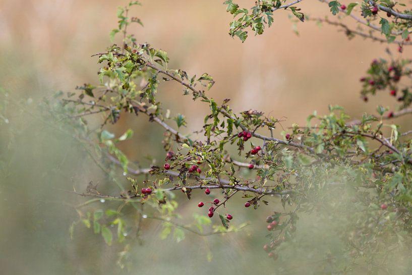 Herbst von Michelle van Doorn