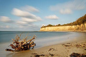 Wortel op een natuurlijk strand