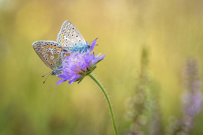 Vlinderliefde van Gonnie van de Schans