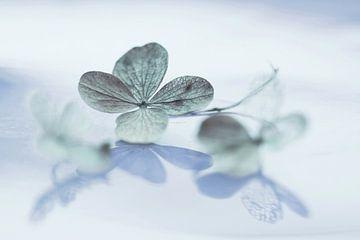 Spiegeling hortensia blad, blauw  (dromerig) van Cocky Anderson