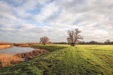 Schilderachtig landschap in de Brabantse Biesbosch van Ruud Morijn