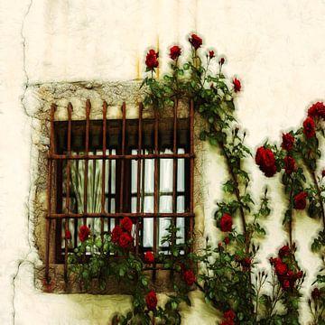 Sommerrosen von Lucia