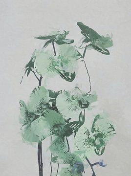 Orchideen von Angel Estevez