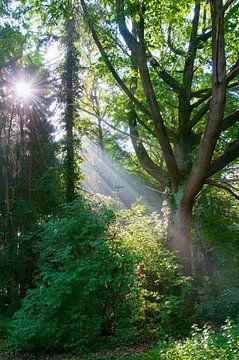 A beautiful morning  von Tamara Witjes