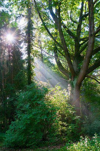 Een mooie ochtend in het Gimbornhof, Zevenaar