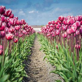 ein Blumenbeet von Martijn Tilroe