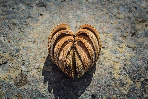 Love on the beach, schelpen in hartvorm van