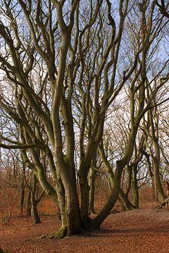 Kronkelboom van Wendy Falentijn