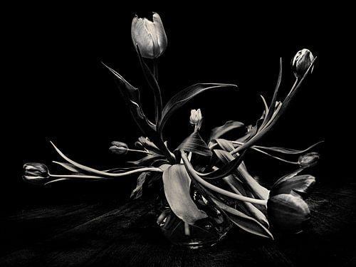 Tulpen van Els Baltjes