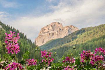 Bloemen en bergen in de Dolomieten van Bianca Kramer