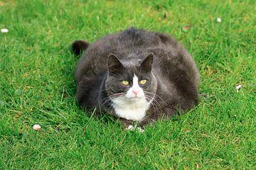 Dikke kat in de tuin van Dennis van de Water