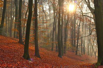 Buchen und Sonnenstrahlen im Herbst von Maarten Pietersma