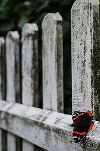 Verweerd hek met zwarte vlinder