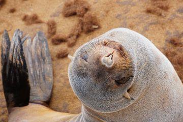 Smiling seal van Anne Hermans