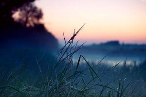 Gras in ochtend dauw van Maik Keizer