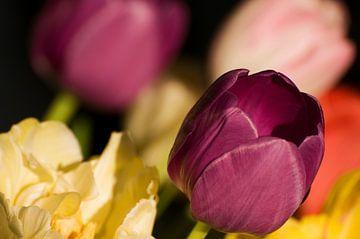 Boeket tulpen van Margot van den Berg