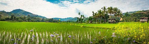 Panorama van een landschap met rijstvelden in Laos