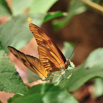 Parende Vlinders van Marc Smits