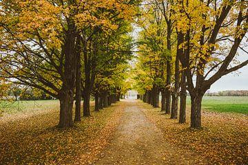 Autumn Trees sur Jos de Boer