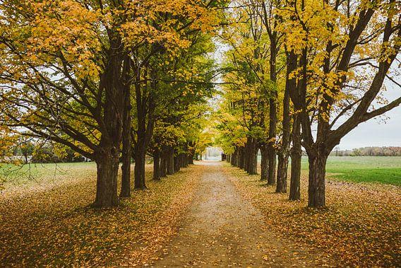 Autumn Trees van Jos de Boer