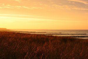 Goldenes Licht am Strand von Zingst