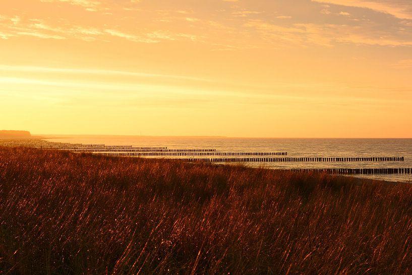 Goldenes Licht am Strand von Zingst von Gisela Scheffbuch