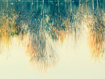 Reflectie van herfstbomen van Gabi Hampe