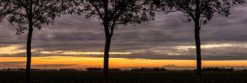 Rangée d'arbres au cours d'un coucher de soleil  sur Sjoerd van der Wal