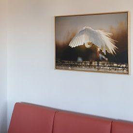 Kundenfoto: Great Egret by Bence Mate von Beschermingswerk voor aan uw muur