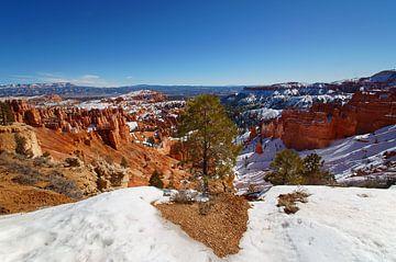 Baum im Bryce-Canyon-Nationalpark, Utah, Vereinigte Staaten von Discover Dutch Nature
