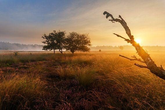 Serengeti van het Zuiden van Marijn Heuts