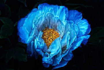 Blauw voor u van Claudia Moeckel