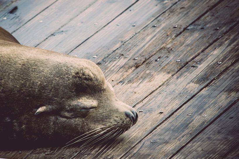Slapende zeeleeuw van Chantal Nederstigt
